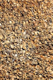 Coquilles d'amandes dans teruel albarracin