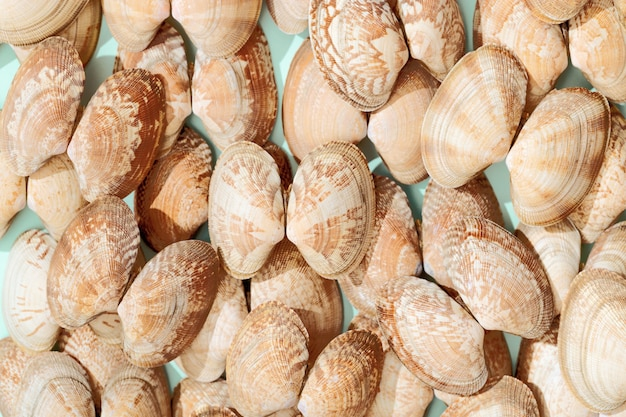 Coquilles blanches et rose tendre sur papier bleu menthe. fond de conception d'été avec de beaux coquillages naturels.