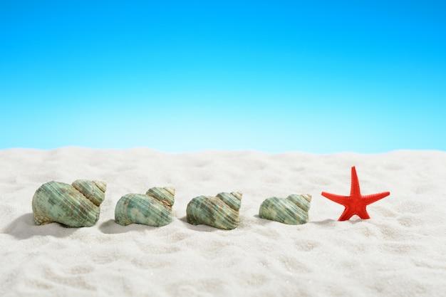 Coquilles d'escargot turquoise et étoiles de mer sur la plage de sable blanc