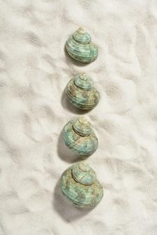 Coquilles d'escargots turquoise sur la plage de sable blanc