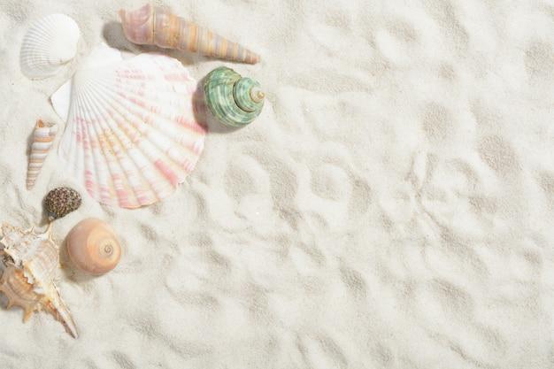 Coquilles de mollusques sur la plage de sable blanc