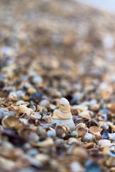 Coquilles sur le rivage, gros plan