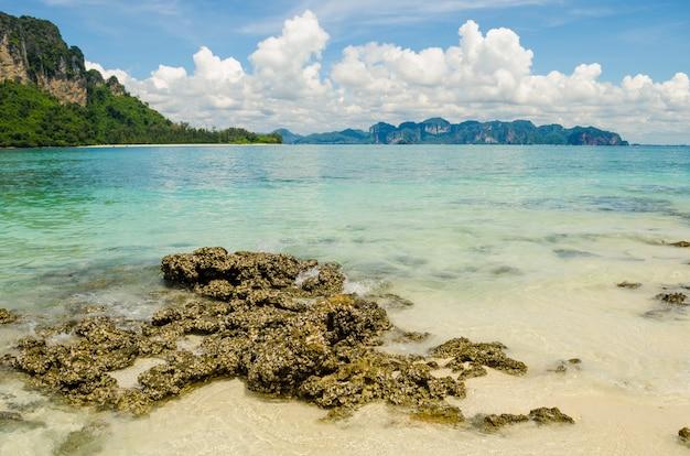 Corail, plage, fond, montian, foyer, corail