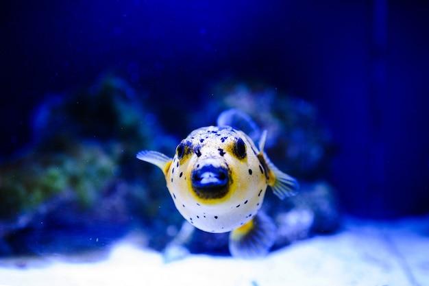 Corail Et Poissons De Mer Photo Premium