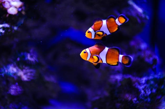 Corail et poissons de mer