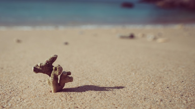 Corail séché sur la plage