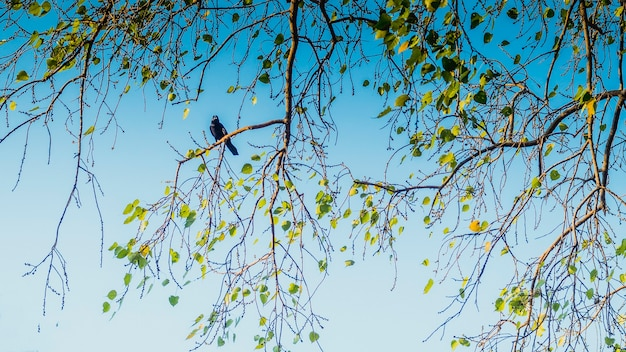 Corbeau assis sur une branche