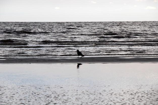 Corbeau dans la nature, près de l'eau
