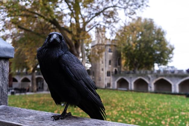 Corbeau noir assis sur un morceau de métal derrière un bâtiment