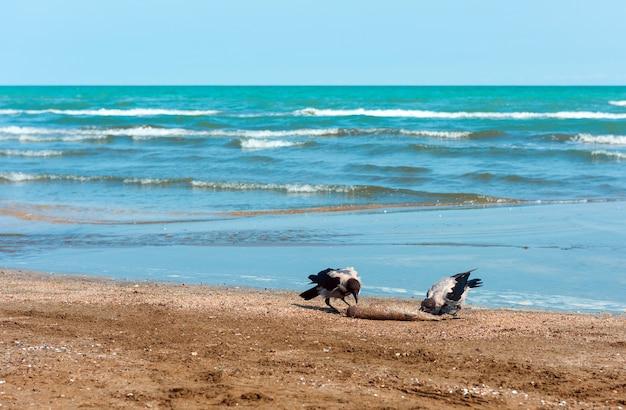 Les corbeaux sur le rivage mangent du poisson