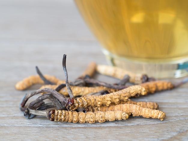 Cordyceps aux champignons (chong cao) cela une herbes.