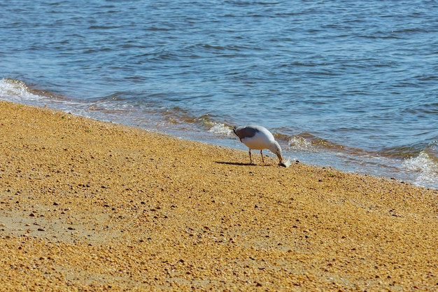 Cormoran avec manger du poisson pêché dans l'océan pour manger confortablement