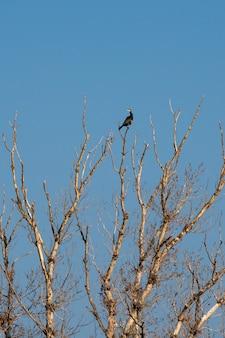 Cormorans assis sur la branche d'un arbre