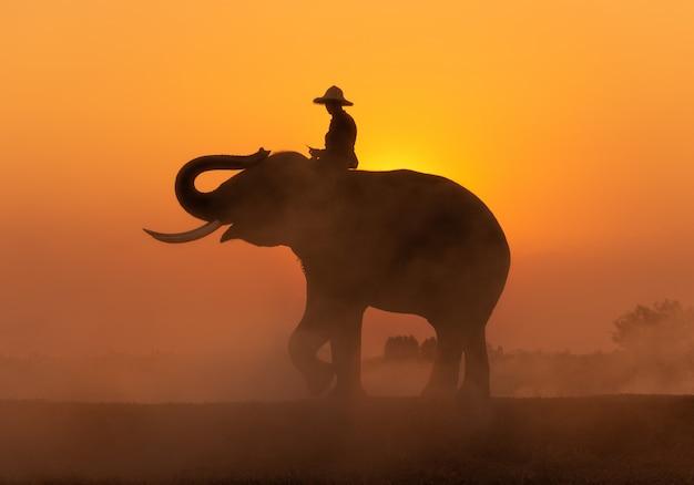 Cornac sur fond d'éléphant et de coucher de soleil