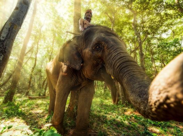 Cornac à surin, thaïlande