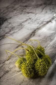Cornichon brésilien, maxixe, éclairé sur un marbre blanc.