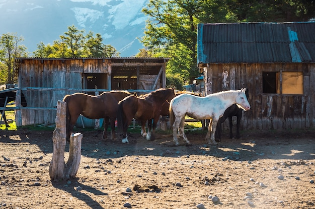 Corral de chevaux en patagonie argentine