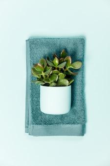 Cosmétique verte mise à plat avec plante succulente