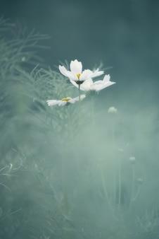 Cosmos abstrait de fleurs blanches pastel