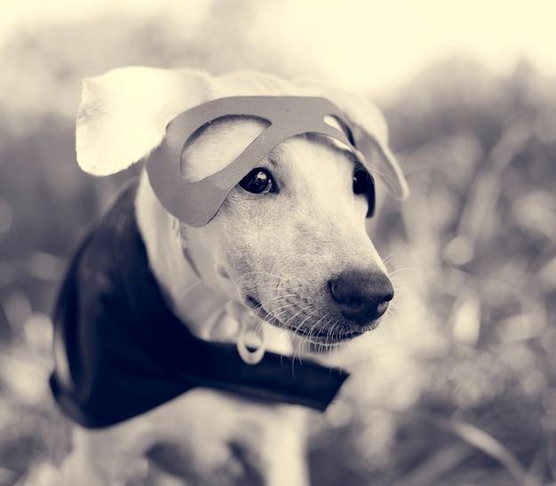 Costume de chien race canine friend mammal animal