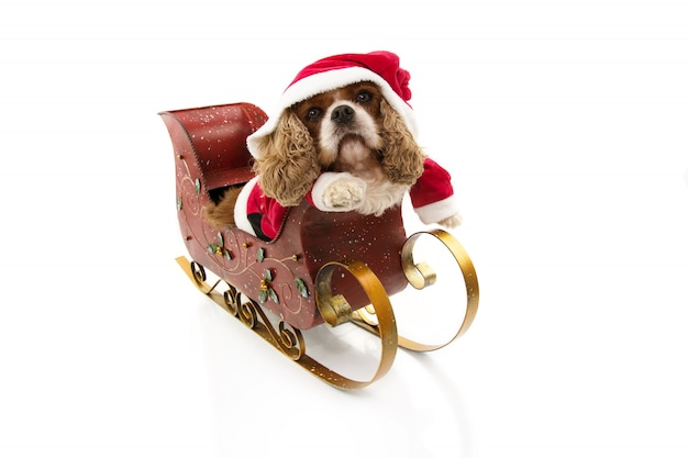Costume drôle de chien du père noël à l'intérieur d'un traîneau aux vacances de noël