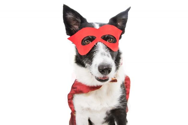 Costume de super héros chien border collie pour le carnaval ou la fête d'halloween portant un masque et une cape rouges.