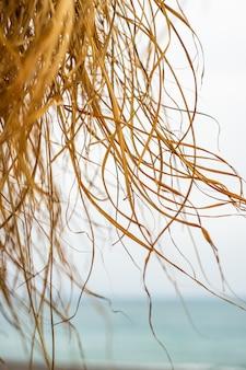 Côte de la mer avec bungalow
