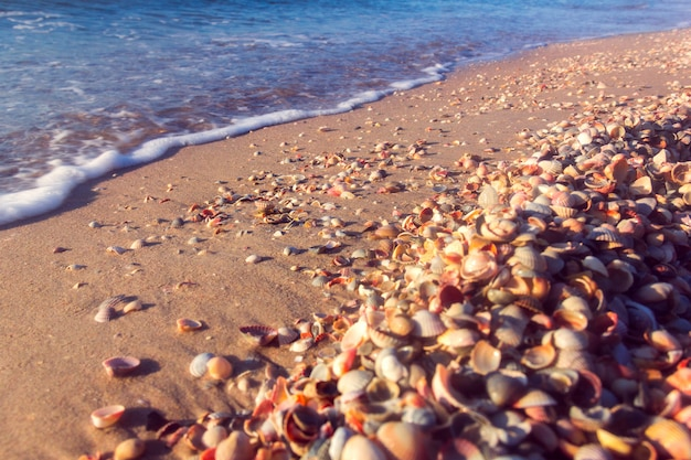 La cote de la mer