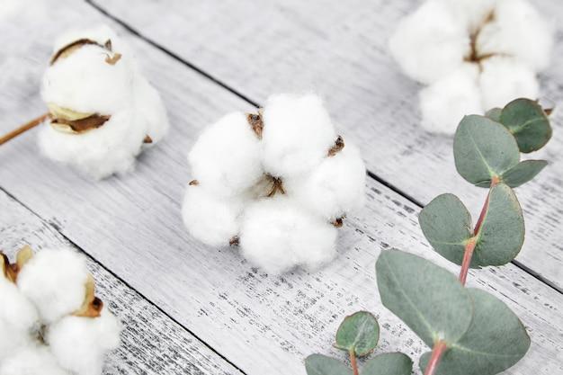 Coton fleurs blanches et feuilles d'eucalyptus vert sur table en bois gris