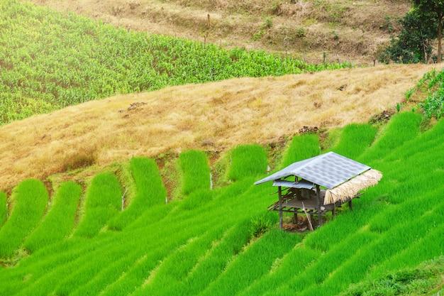 Cottage dans les rizières à l'asiatique, style de hutte de l'asie