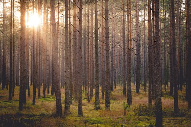 Coucher du soleil dans un parc d'automne à nowy targ, pologne