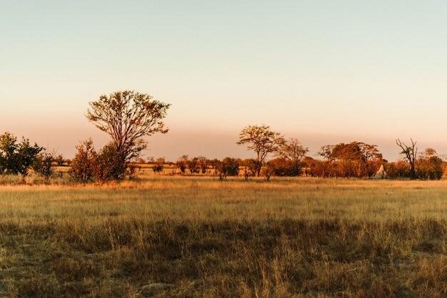 Coucher du soleil dans le parc national de hwange, zimbabwe