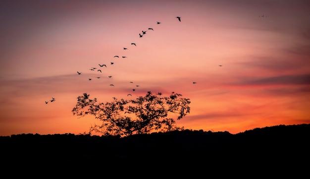 Coucher du soleil du soir avec des arbres silhouette sur paysage de campagne anglaise à partir d'un pic de colline à charmouth grande bretagne