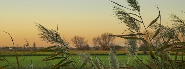 Coucher du soleil de fossé d'herbe, image de bannière avec l'espace de copie