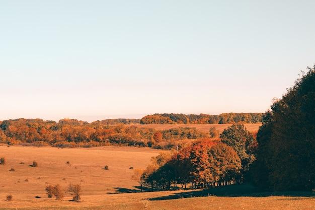 Coucher du soleil de la prairie. paysage nature d'automne. herbe rouge, arbres et ciel sans nuages.