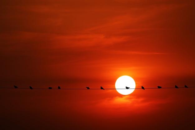 Coucher du soleil de retour sur la silhouette rouge foncé orange nuage du soir sur le ciel et l'oiseau sur la ligne électrique