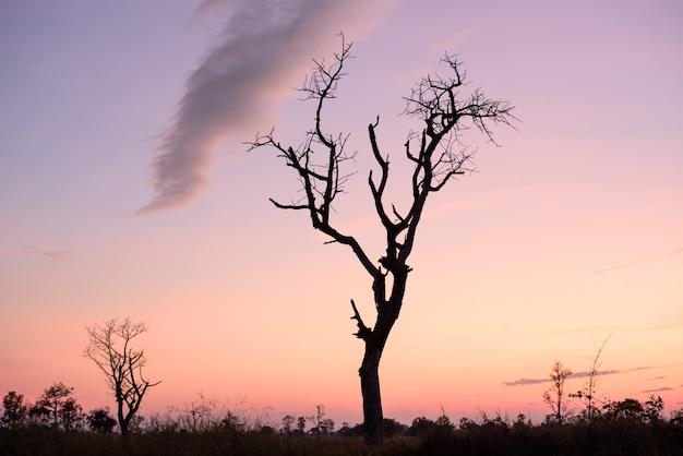 Coucher de soleil avec arbre mort et fantaisie clone dans le champ de pays