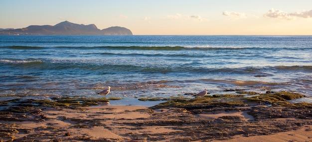 Coucher de soleil au bord de la mer avec des goélands à majorque