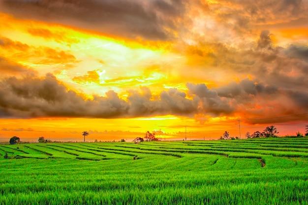 Coucher de soleil de beauté sur les rizières vertes après la pluie dans le nord de bengkulu, indonésie