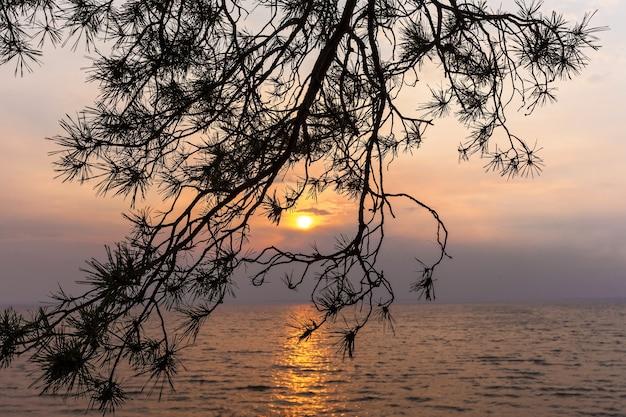 Le coucher de soleil brille à travers les arbres qui poussent sur la falaise.