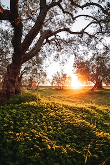 Coucher de soleil à la campagne avec beaucoup d'arbres dans un pré