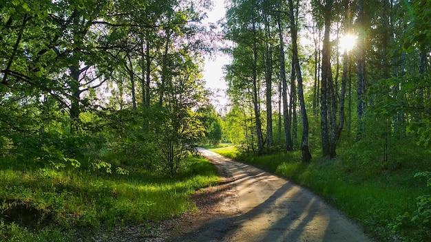 Coucher de soleil chaud dans la forêt d'été