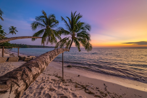Coucher de soleil ciel dramatique sur la plage du désert tropical, cocotier palmier fronde personne, destination de voyage, indonésie moluques îles kei plage de wab