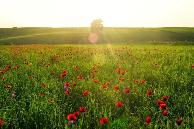 Coucher de soleil coloré sur le champ vert