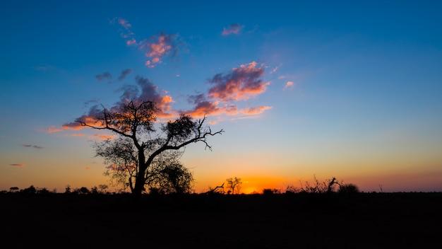 Coucher de soleil coloré dans la brousse