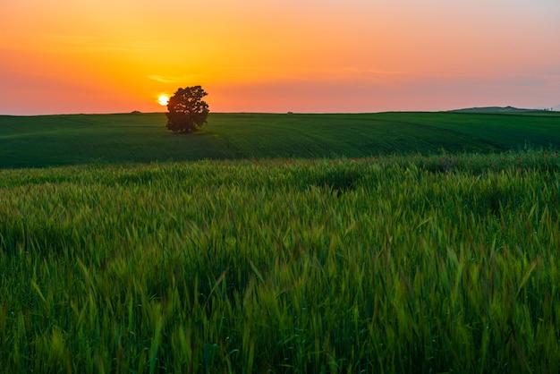 Coucher de soleil coloré sur le terrain de la ferme