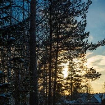 Coucher de soleil dans la forêt d'hiver