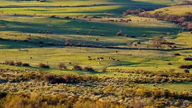 Coucher de soleil dans les montagnes avec petits villages à flanc de montagne, vaches et fermes à la campagne. navacerrada madrid. espagne.