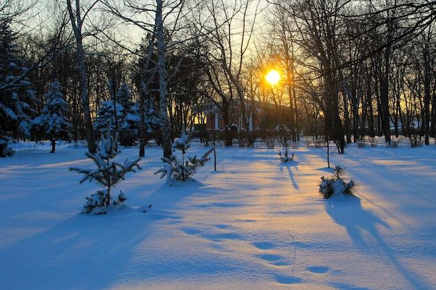 Coucher de soleil dans le parc de la ville en hiver