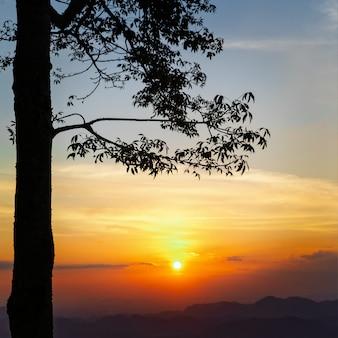 Coucher de soleil derrière l'arbre sur la montagne.